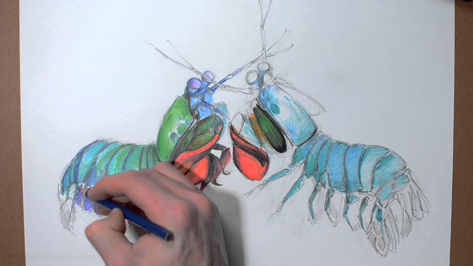 1920x1080 Mantis Shrimp