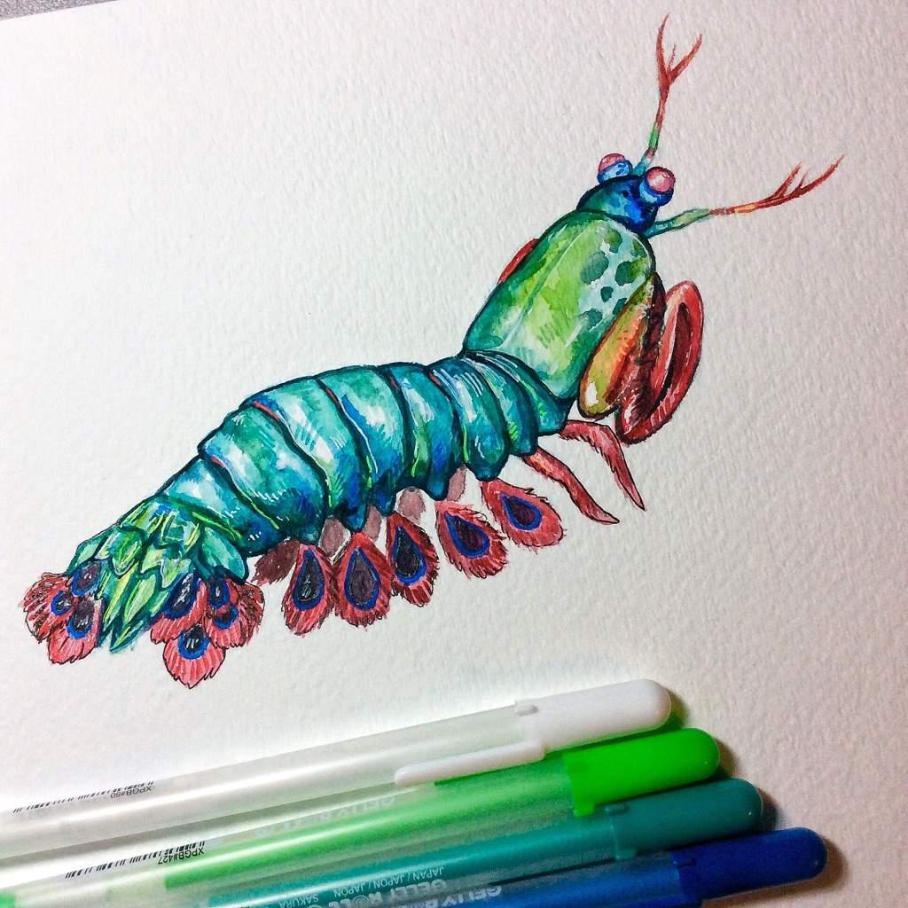 1024x1024 Peacock Mantis Shrimp Amino