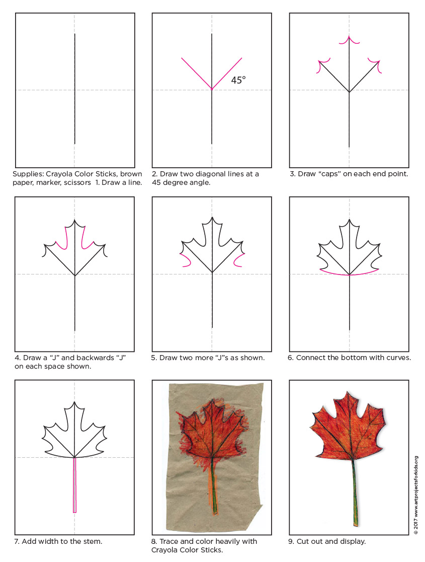 845x1116 How To Draw A Maple Leaf