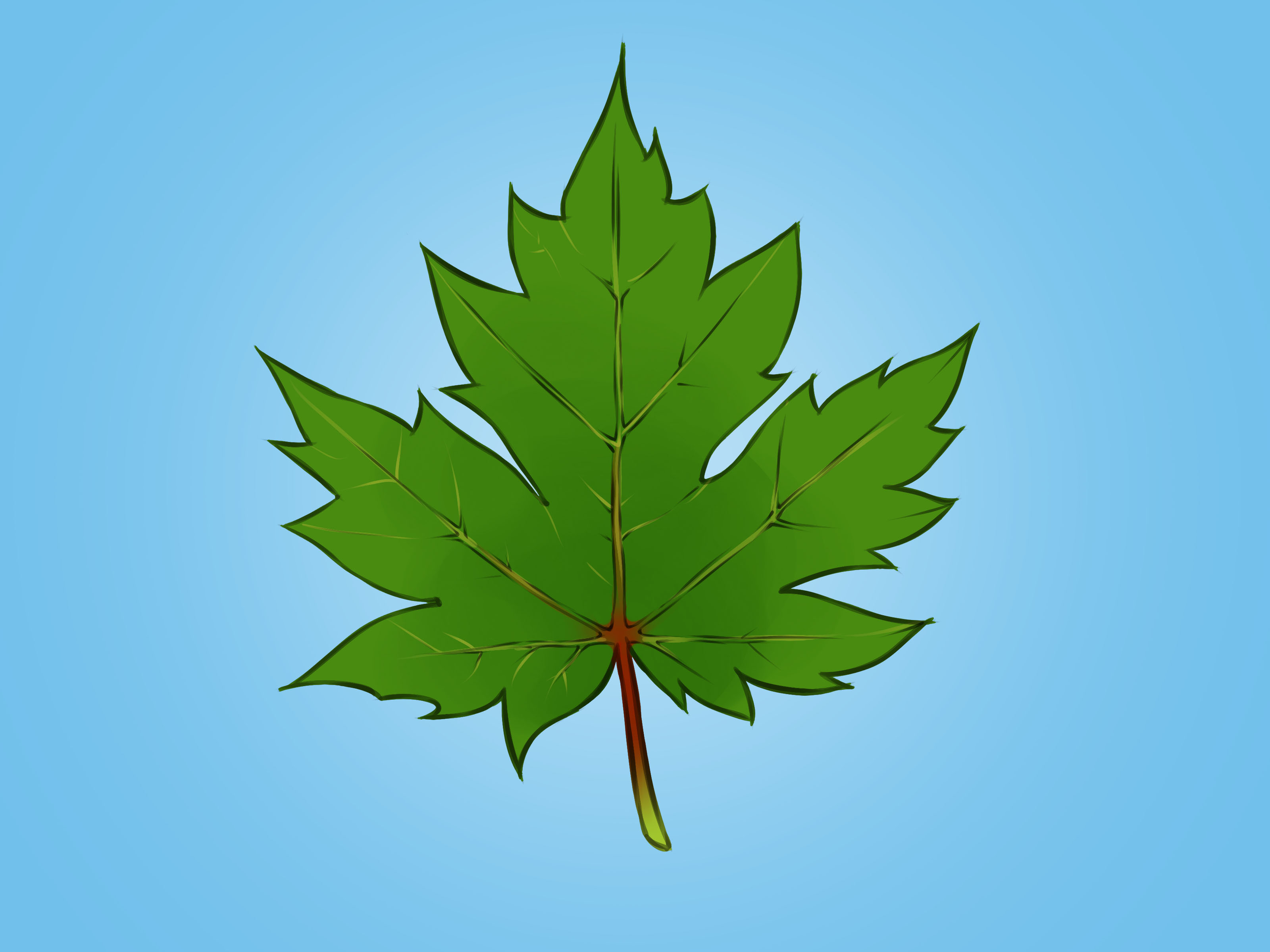 3200x2400 How To Draw A Maple Leaf 12 Steps (With Pictures)