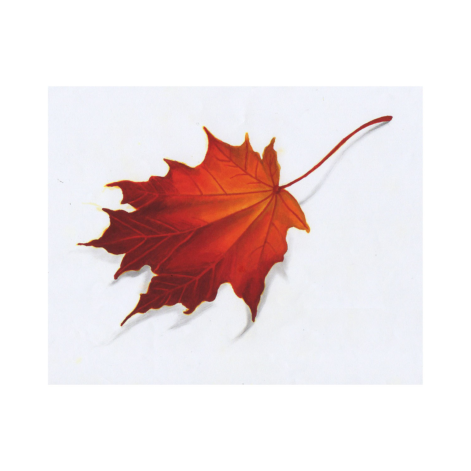 1500x1500 Autumn Fall Leaf Drawing Color