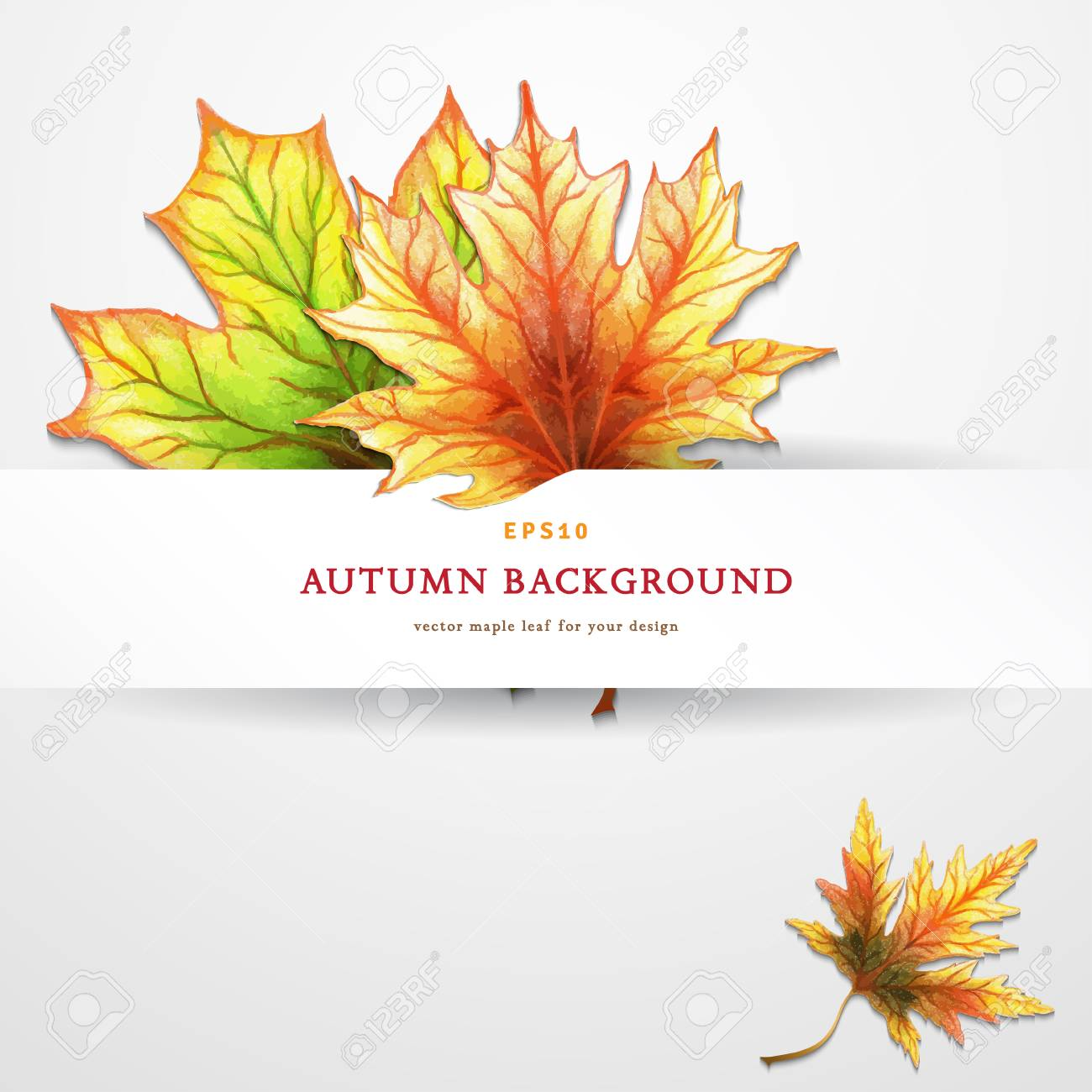 1300x1300 Vector Template. White Panel Of Paper And Autumn Maple Leaves