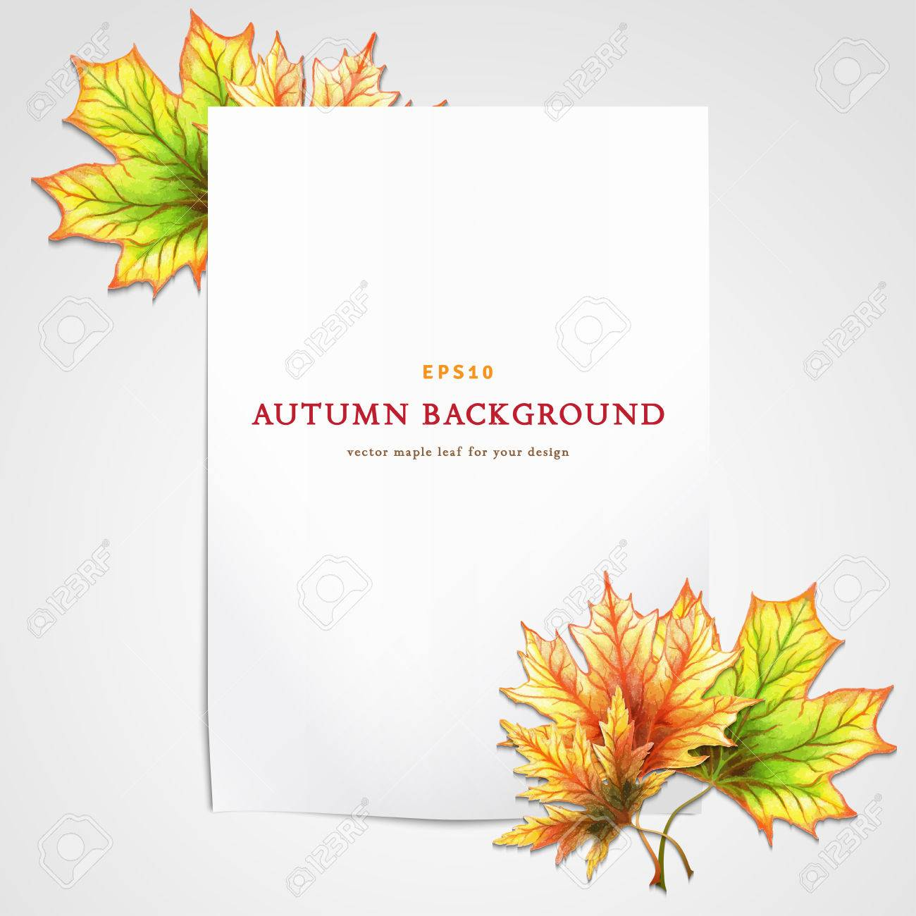 1300x1300 Vector Template. White Sheet Of Paper And Autumn Maple Leaves