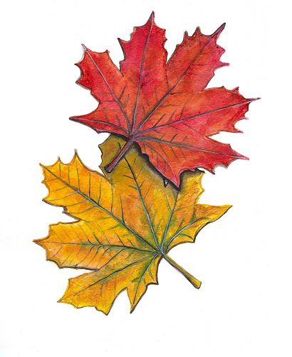410x500 12 Best Maple Leaf Images On Paint, Watercolor Leaves