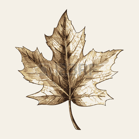 450x450 Maple Leaf Stock Photos. Royalty Free Business Images