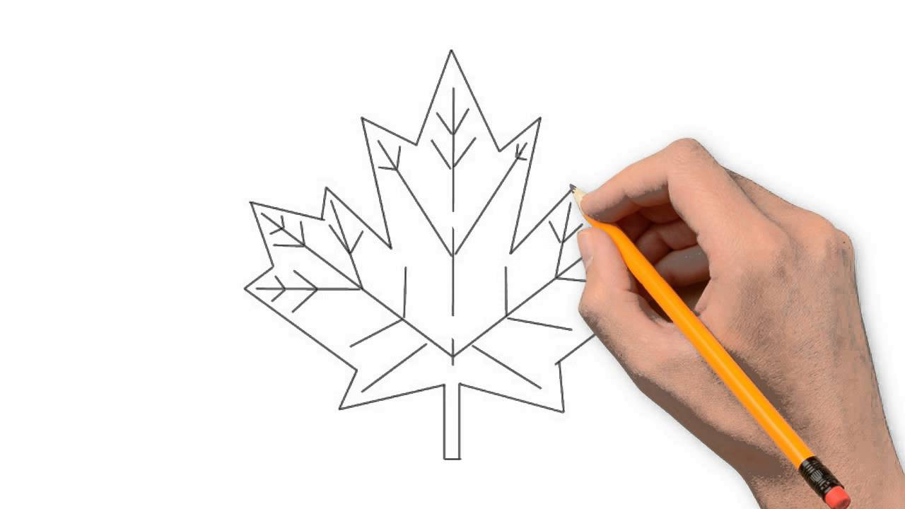 1280x720 Maple Leaf Nature Pencil To Draw Step By Step