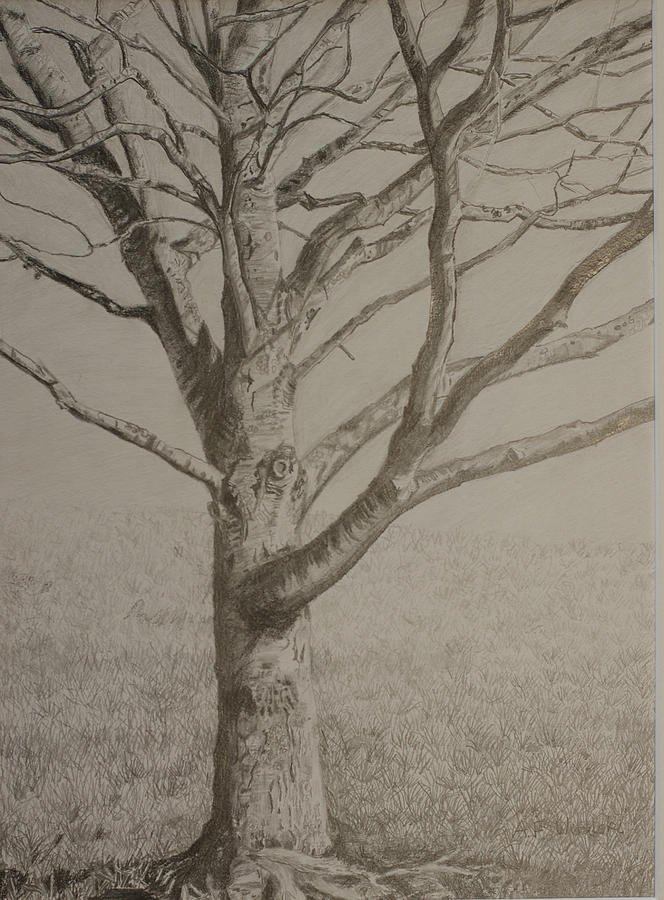 664x900 Maple Tree In Winter Drawing By Arthur Witulski