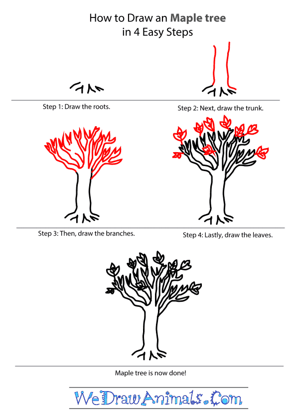 600x838 To Draw A Maple Tree