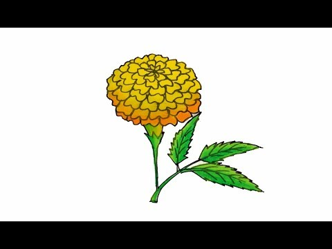 480x360 How To Draw A Realistic Marigold Flower Easy And Simple Sayataru