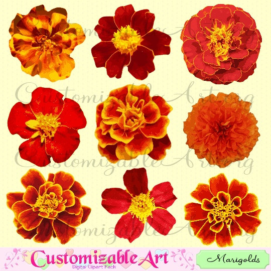 540x540 Marigold Clipart Digital Flower Clip Art Tagetes Flower Red Fiery