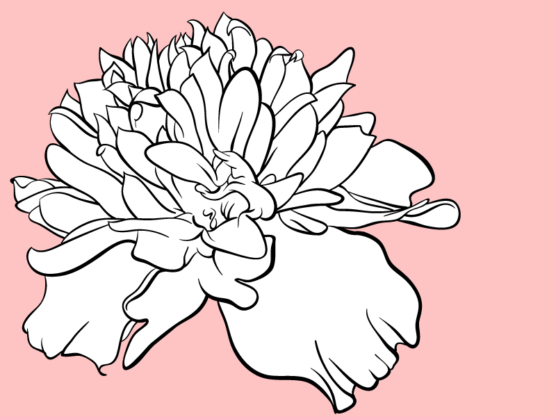 Marigold Flower Drawing at GetDrawings.com | Free for ...