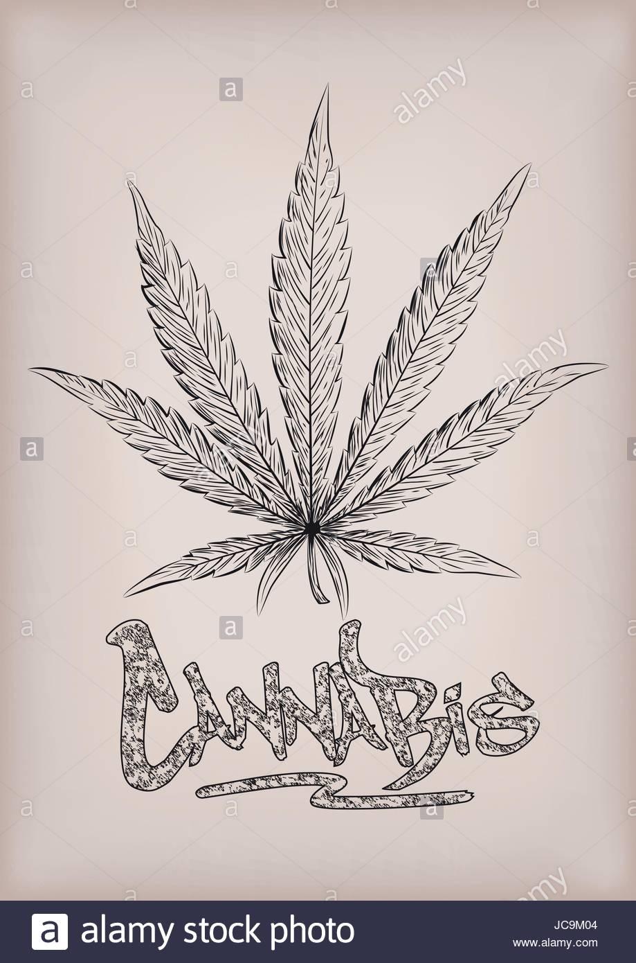 919x1390 Cannabis Marijuana Weed Leaf Silhouette Narcotic Drug Plant