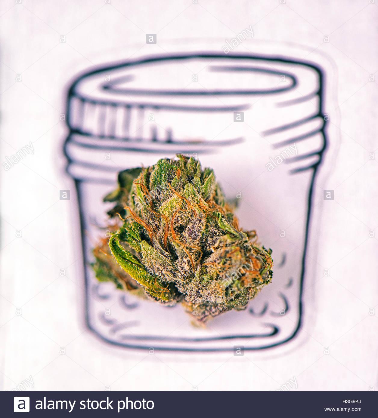 1256x1390 Dried Cannabis (Marijuana) Bud Macro Over A Jar Drawing On White