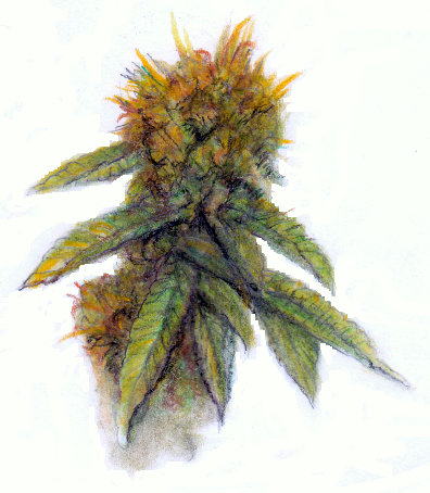 396x454 My Drawing Of A Marijuana Bud To Bring Awareness To Support