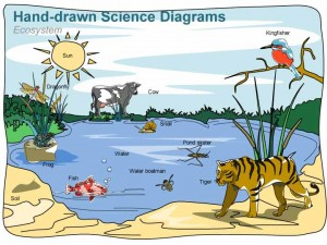 300x225 An Ecosystem Diagram And It's Specific Functions