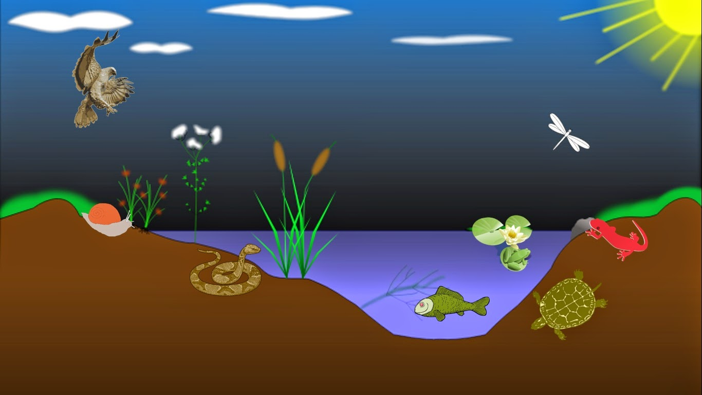 1366x768 Marine Biome Drawing, Pond Ecosystem Biomes Project