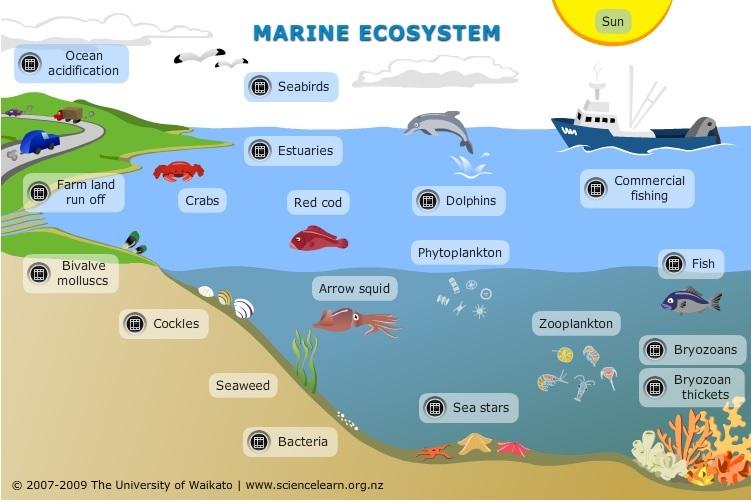 751x502 Marine Ecosystems