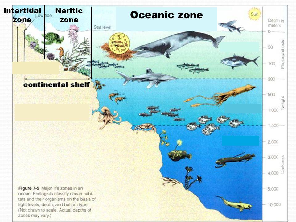 960x720 Marine Ecosystems.