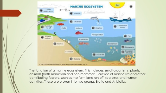 638x359 Marine Ecosystem Slide Show Created By Leasa Konza