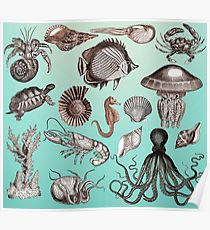210x230 Marine Life Drawing Posters Redbubble