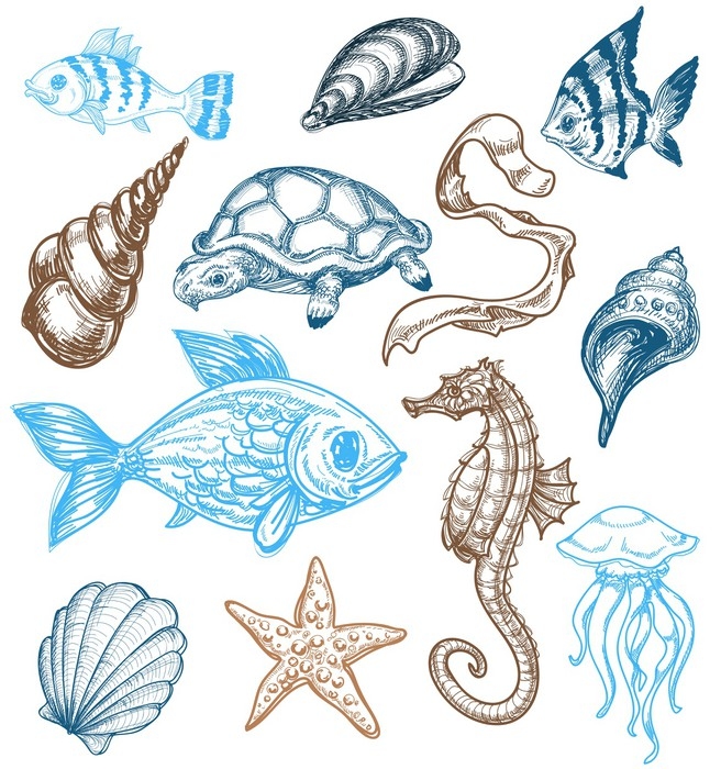 656x700 Marine Life Drawing Wall Decal We Live To Change