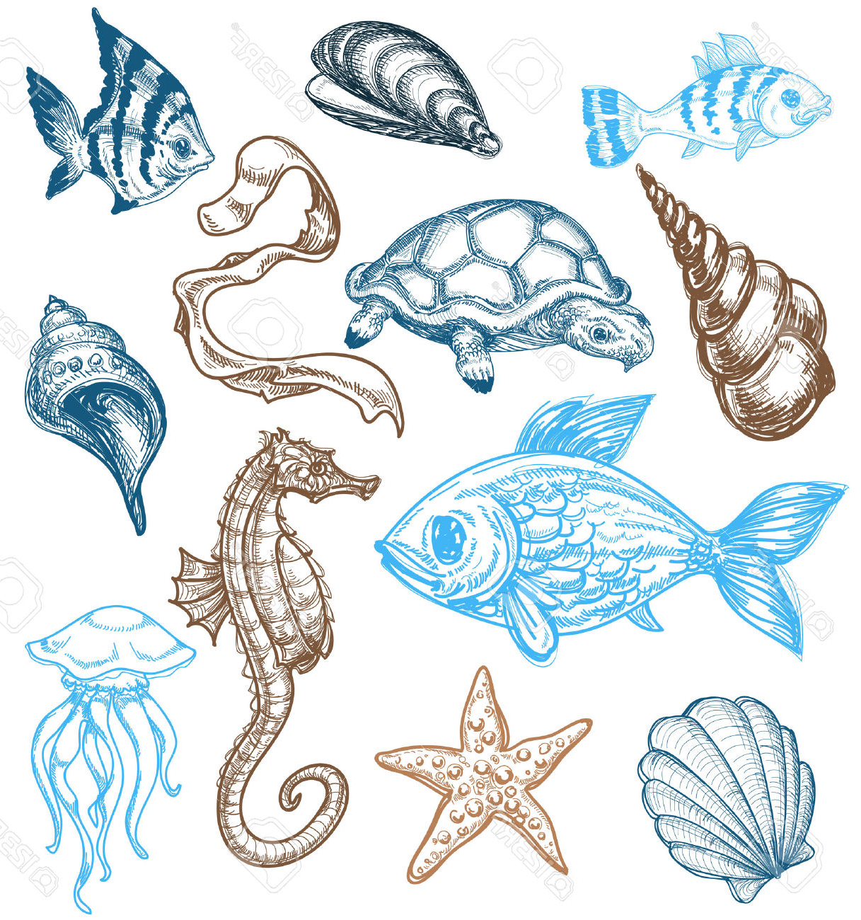 1217x1300 Sketch Of An Ocean Animal Marine Life Drawing Royalty Free