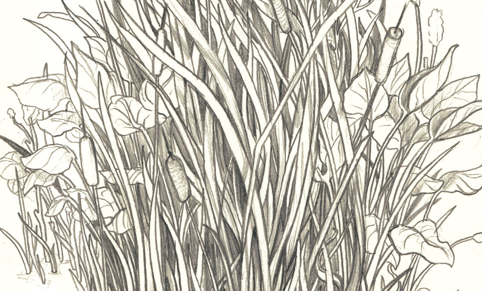 950x575 Caitlin Russell Illustration Amp Design, Toronto, Canada