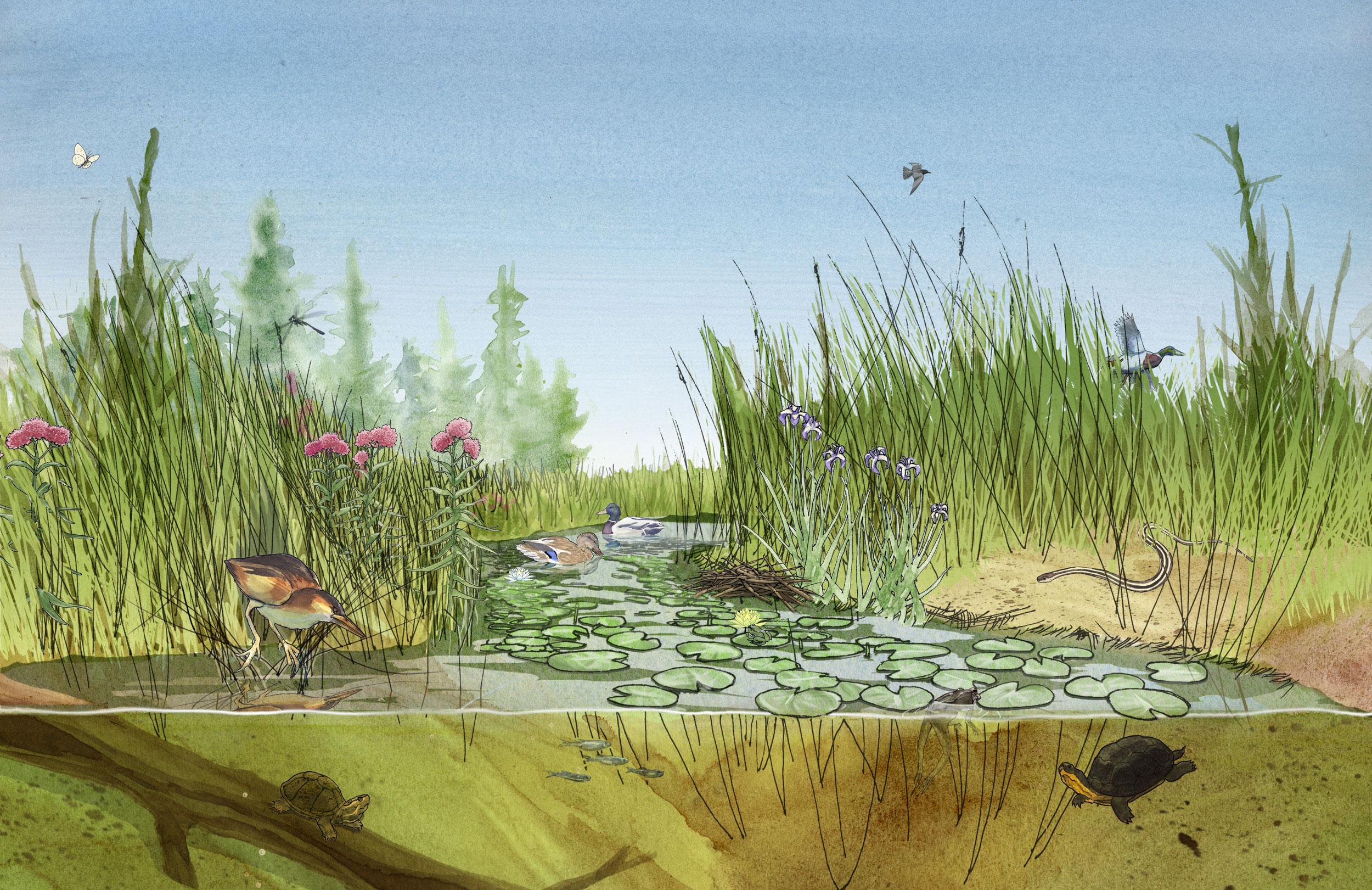 2500x1621 Chris Coles Wildlife And Habitat Along The Trent Severn Waterway