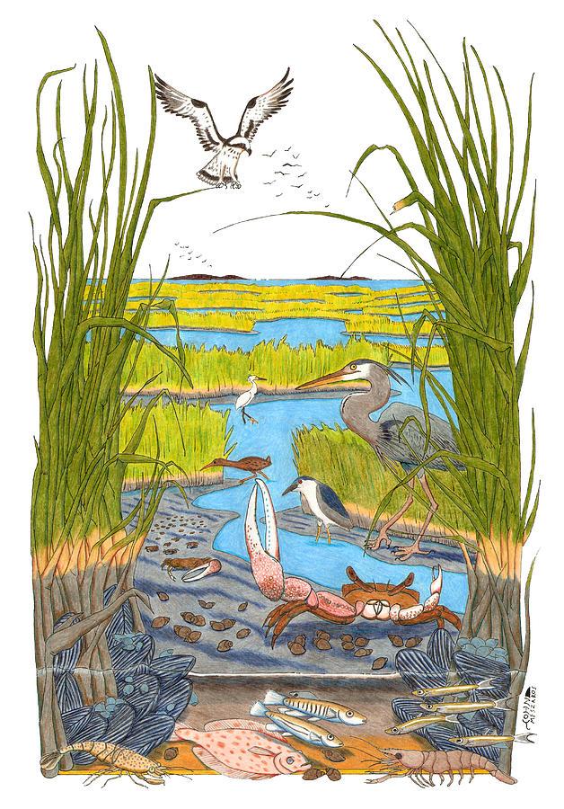 628x900 Salt Marsh Drawing By John Meszaros