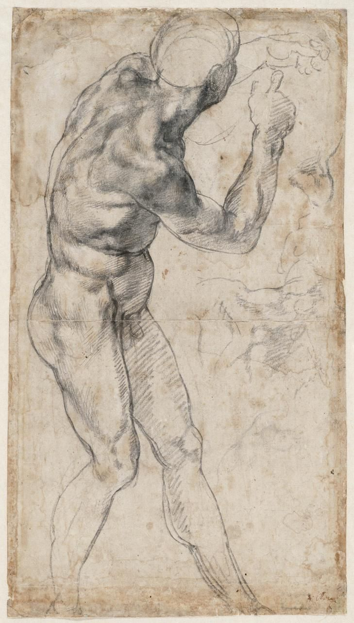 729x1280 49 Best Masterpiece Images On Michelangelo, Anatomy