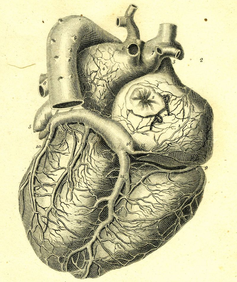 800x953 Vintage (Recuento) Medical Illustrations, Medical And Vintage