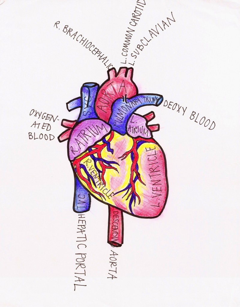 800x1024 Drawing From Medicine Doctors Who Create