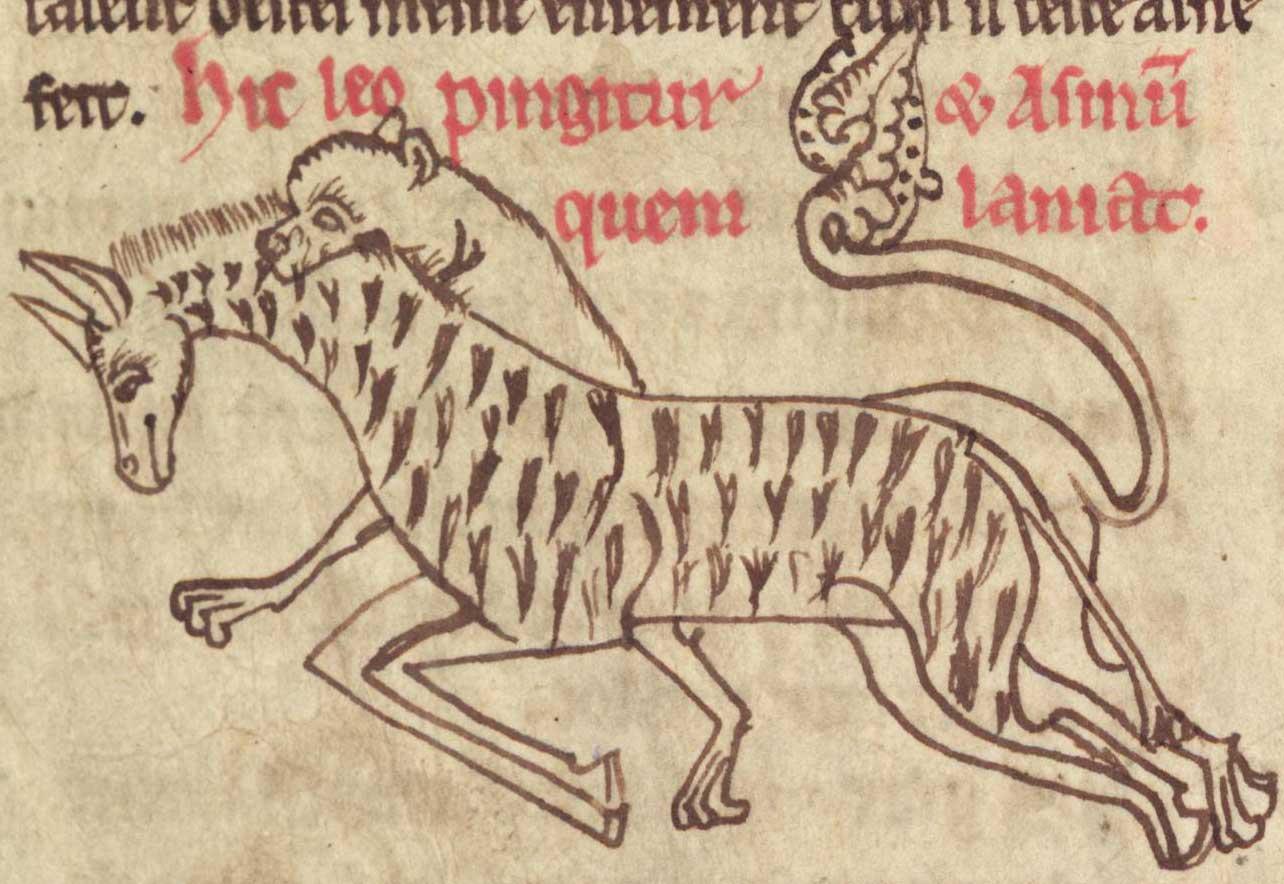 1284x884 Medieval Bestiary Lion Gallery Medieval Bestiary (Board 1