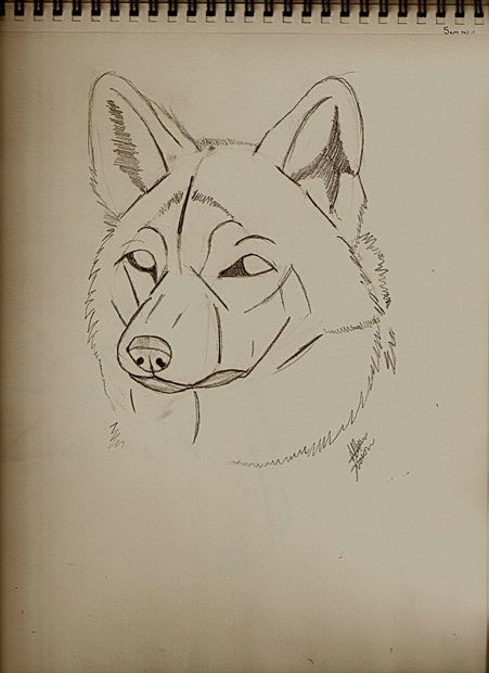 451x620 Guides To Drawing Wolves 4 Steps