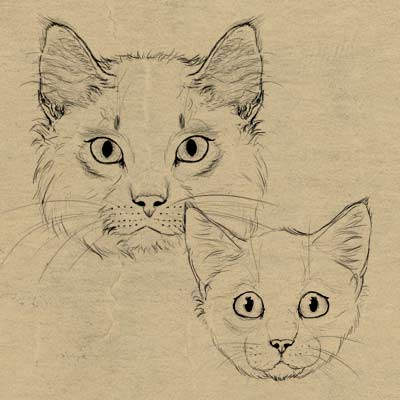 400x400 How To Draw Animals Cats And Their Anatomy