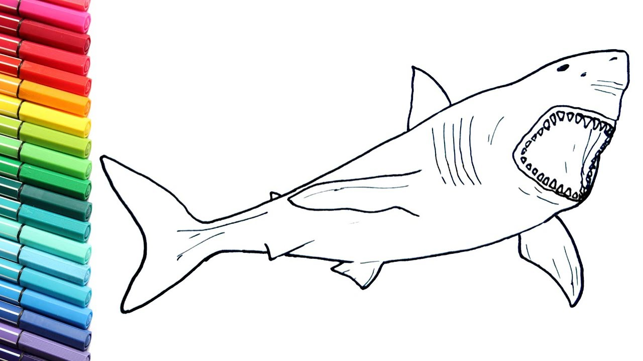 1280x720 Drawing And Coloring Megalodon Shark