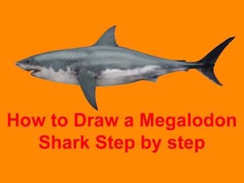480x360 How To Draw A Megalodon Shark Step By Step