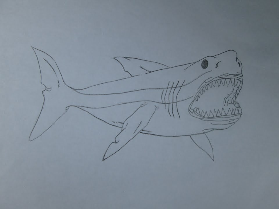 960x720 How To Draw A Megalodon
