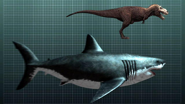 640x360 Megalodon In Scale Drawing To T Rex