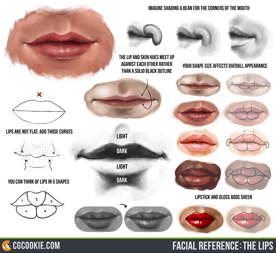 900x825 Facial Reference The Lips By Cgcookie