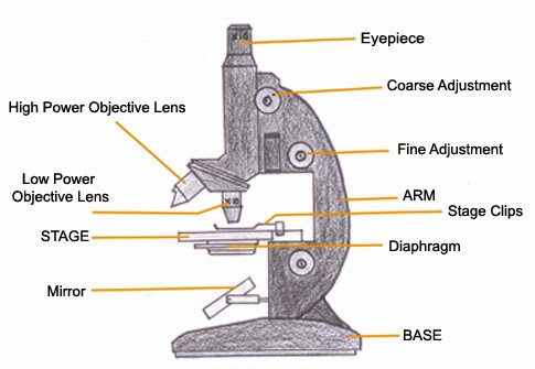 Microscope drawing and label at getdrawings free for personal 485x335 mechanical technology metallurgical microscope ccuart Image collections