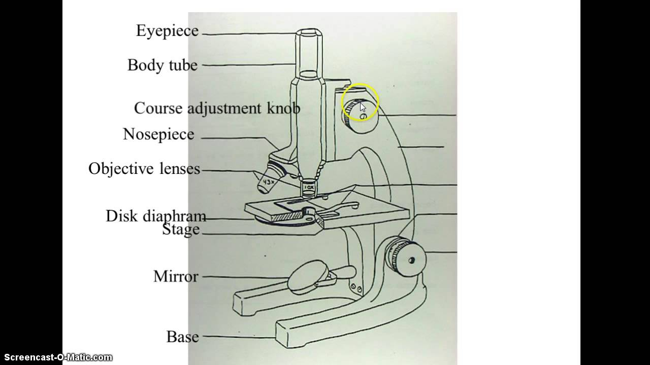 1280x720 Microscope Drawing With Parts Microscope Diagram