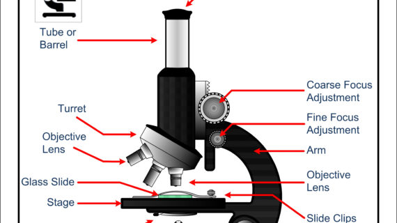 570x320 Microscope Drawing With Parts A Study Of The Microscope And Its