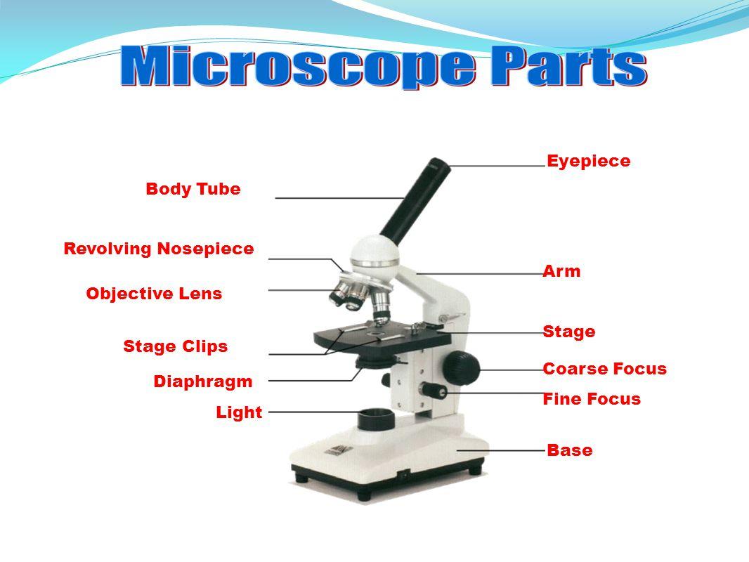 Compound Microscope Parts Diagram - Micropedia