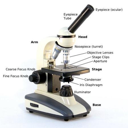 450x450 Microscope Parts