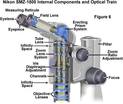 399x336 Microscope Diagram Microscope Parts