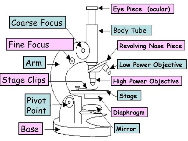 638x479 Microscope