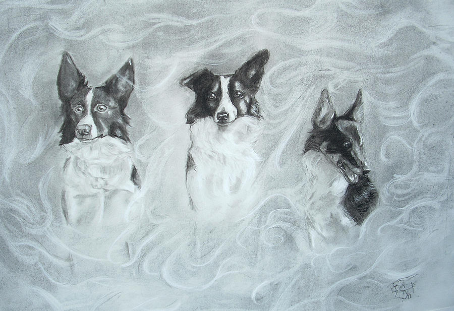 900x617 Collies In The Mist Drawing By C Nick
