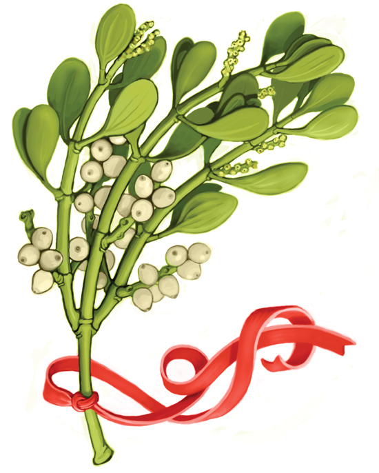 550x686 Mistletoe