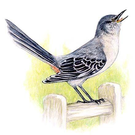 440x440 Mockingbird Mockingbird Board Tattoo